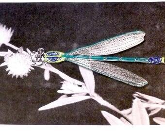 Entomojoly - décoration textile, entomologie, insecte brodé, piqué libre, cabinet de curiosités, illustration brodée