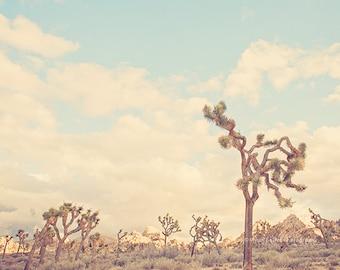 photo of a Joshua Tree, California desert photography, desert print, southwest art, Joshua Tree nursery decor, blue, brown, boys room