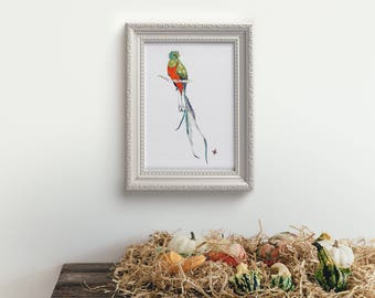 Quetzal - limited edition print from original 8.5 x 11 // Home Decor 13 x1 9, 11 x 14, 8 x 10, 5x 7