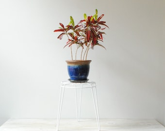 "Vintage Plant Stand, 13"" Coated Wire Plant Stand"