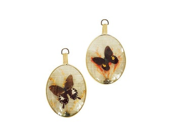 Vintage Framed Taxidermy Butterflies / A Pair