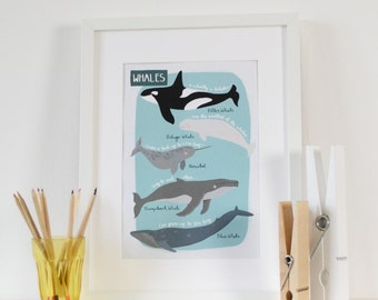 Whales A4 Print, Whales Children's Bedroom Art Print, Kids Underwater Print, Educational Sea Life A4 Print