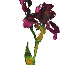 "ON SALE, Iris Painting, Original Acrylic Floral Still Life Painting, 14 x 10"", ""Purple Iris Gestured"" by Kim Stenberg, Contemporary Art"