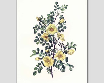 Yellow Rose Print, Cottage Wall Art, Vintage Home Decor, 1960s Climbing Flower Illustration No. 4