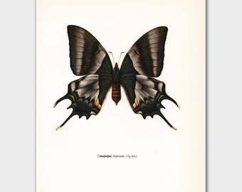 "Butterfly Art Print (1960s Dorm Decor, Green Butterfly Wall Art) --- ""Hope Swallowtail"" No. 86-1"