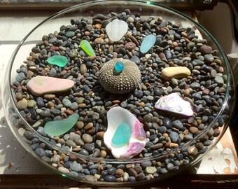 Aqua Teal Lime Abalone Sea Glass Terrarium Display