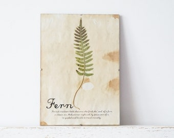 Pressed Herbs- Fern in Frame (2)