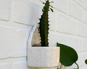 Modern Wall Planter - Contemporary Air Plant Holder, Desktop Succulent Planter.  Tiny wall planter, glazed in speckled beige.  In stock now!