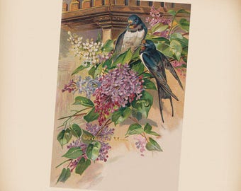 Swallows With Lilac - New 4x6 Vintage Postcard Image Photo Print - FN24
