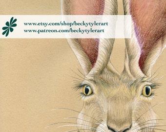 Jack Rabbit Original Drawing
