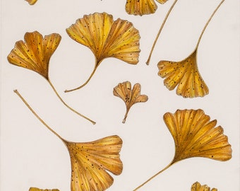Late Autumn Ginkgo Leaves Original Pen and Ink Drawing