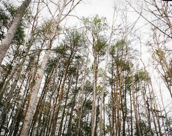 Green Mountain Treescape; photograph; art print; nature; wall art; tree