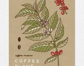 Coffee Plant Botanical - 11 x 14 Screen Print