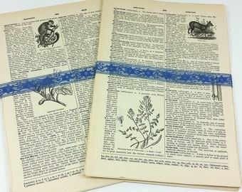 SALE! Vintage Dictionary Pages Paper Ephemera 30 Pack from 1942 New Century English Dictionary