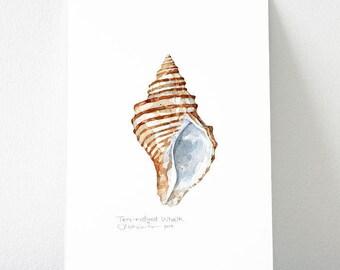 Whelk Seashell Original Watercolor Painting