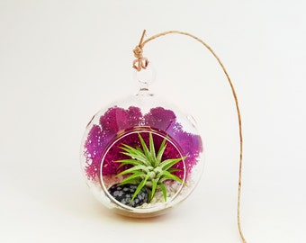 Mini Air Plant Terrarium Kit with Fuchsia Moss, White Rocks and Snowflake Obsidian Stone / Round or Teardrop / FREE SHIPPING