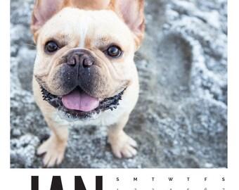 The Life of Hank 2017 Calendar