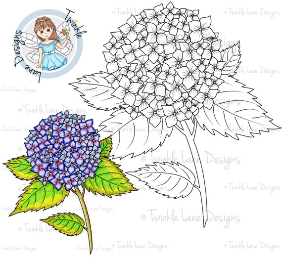 hydrangea digi stamp flower digital stamp flower clipart birthday mothers day floral adult colouring page plant gardening