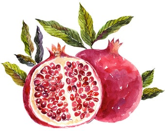 Watercolor pomegranate. Fine art prints. Beautiful print for living room, bedroom.