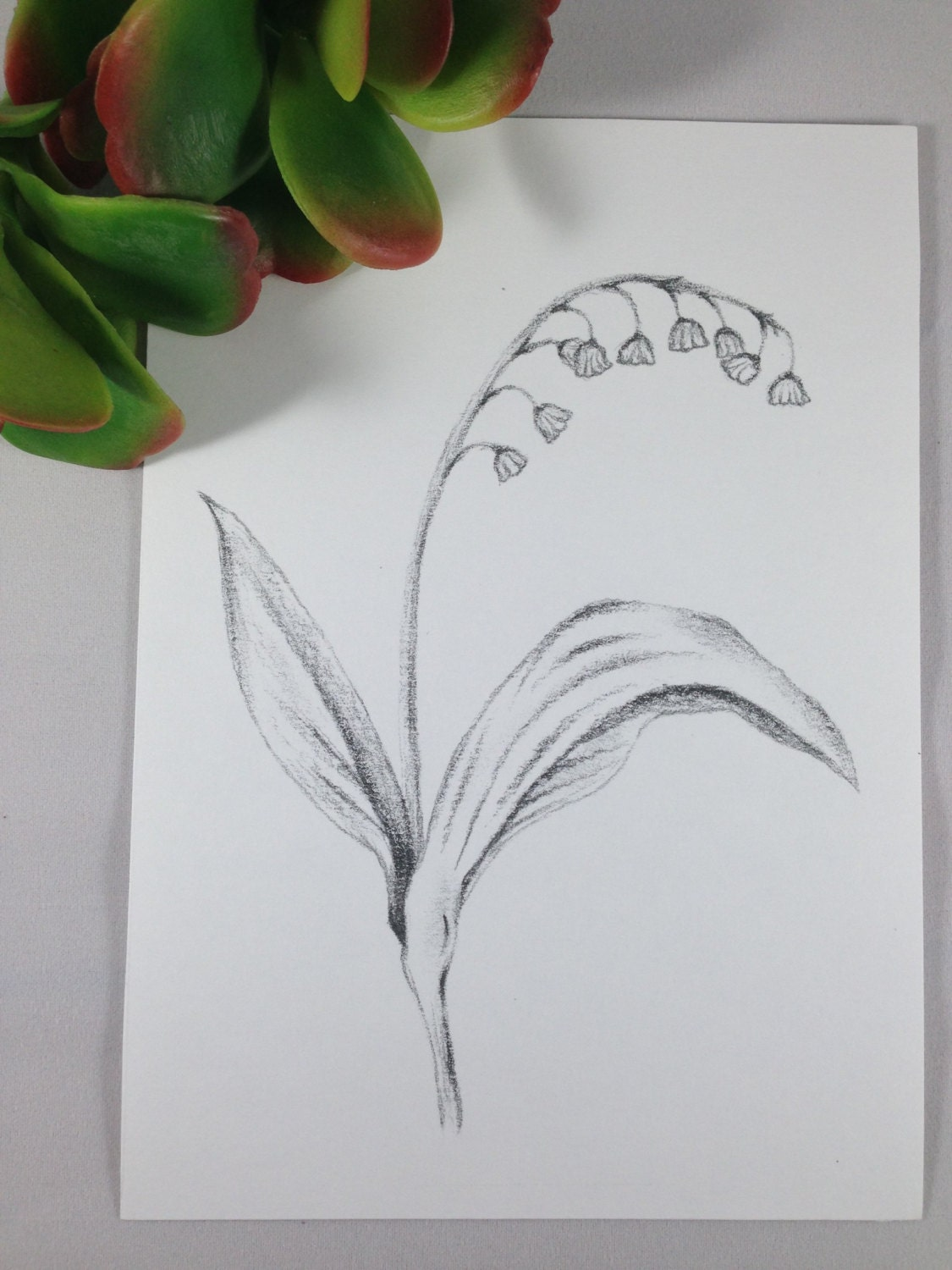 lily of the valley drawing lily of the valley print