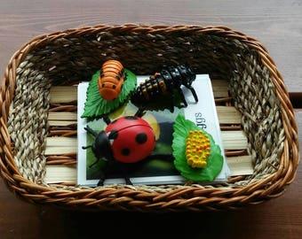 Lady Bug Life Cycle, Montessori