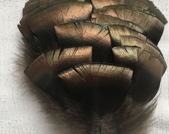"""20 USA Wild Eastern Turkey feathers 3-4"""" long with quills-metallic green,copper,bronze-crafts, home decor,hats,American Indian traditions"""
