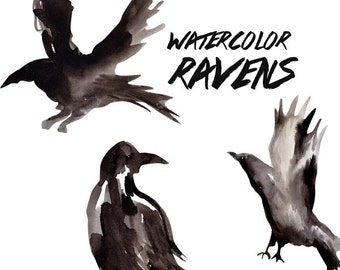 Raven Watercolor Clipart Commercial Use