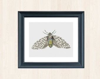 Moth Cross Stitch Pattern Instant Download Stitch Pattern Butterfly Insect Embroidery Insect Cross Stitch Butterfly Embroidery Vintage