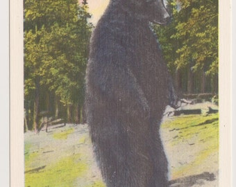 Vintage Linen Postcard, I Can't Bear to Leave, NS412, Black Bear, Ephemera, Unused