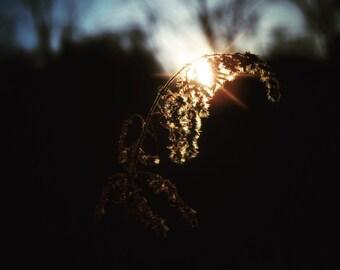 Weedy Sunset