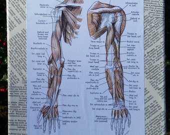 Anatomy of Art: Deep Muscles of the Arm, Pages on Canvas