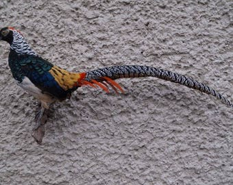 Lady Amherst Pheasant Taxidermy