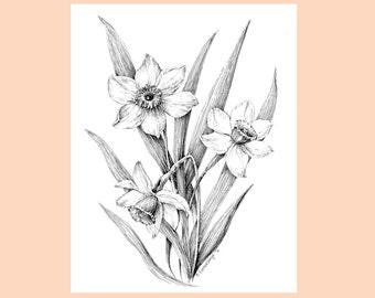 Daffodil flower art,  Narcissus drawing, original floral sketch,  botanical art work, narcissus artwork, pen and ink flower illustration