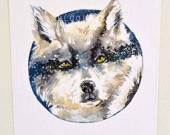 Golden Gaze (aka. Sassy Wolf)