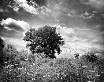 """Black & White Tree On A Cloudy Prairie, Country Field, Nature Photo, Wildflowers, Country Home Decor, Tree Print, Sky Photo """"Cloudy Prairie"""""""