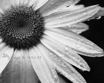 Floral photography, flower print, black & white, floral, nature photography, romantic photo, dark, dreamy photography, wedding inspo