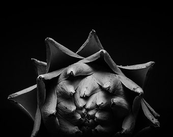 Abstract fine art photographic print of an artichoke in stunning black and white to print on paper or canvas or metal or acrylic