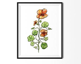 Nasturtium Print, Flower Art, Botanical Illustration, Floral Art, Flower Painting, Botanical Print, Nasturtium Painting, Flower Print
