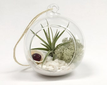 Cancer July Ruby Air Plant Garden Kit • terrarium tillandsia birthstone crystal birthday personalize gift diy present decor airplant gem