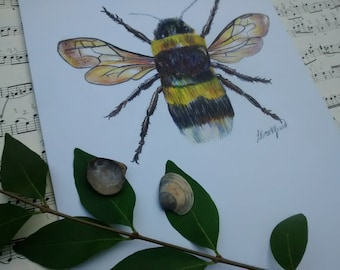 White-tailed Bumble Bee original drawing on A4 card, wall art