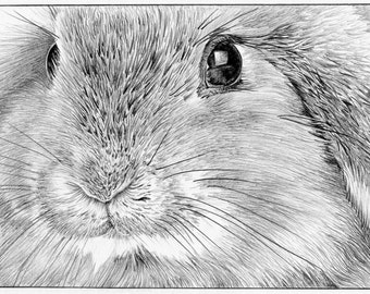 LOP-EARED Rabbit Bunny Limited Edition art drawing print signed by UK artist