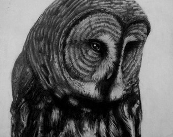 "Great Gray Owl ""Benevolence"" Strix nebulosa Original Drawing Print Decor Halloween"