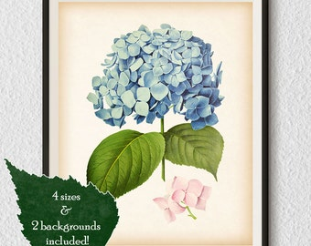 Living room prints, Hydrangea art, Home wall decor, Hydrangea print, Hydrangea printable, Antique botanical print, Print vintage, #34