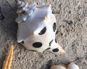 Beautiful Kate Spade Decoupaged Seashell, Coastal Home Decor, Florida Seashells, Designer Seashells, Beach Shells