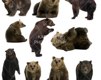 Brown Bear Overlays, High Resolution, Seperate PNG's, Instant Download.