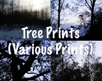 "12""x8"" Tree Photography Prints (Various Prints Available) 1"
