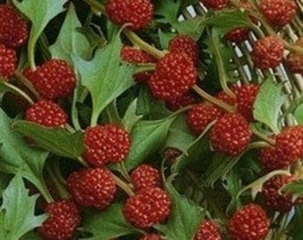 Strawberry Spinach 50 Seeds, Beetberry