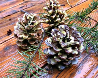 Organic Beeswax Dipped and Scented Pine Cone Fire Starters Set/3, Hostess Gift, Home Decor, Fireplace, Rustic Home Decor, Craft Pine Cones