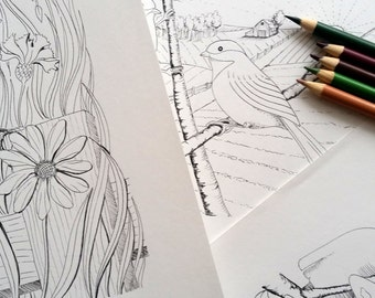 The complete Chickadee Colouring book