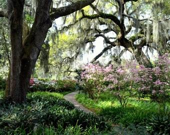 Garden of Eden, with flowers, paths, oak trees, spanish moss and grass near Myrtle Beach, SC